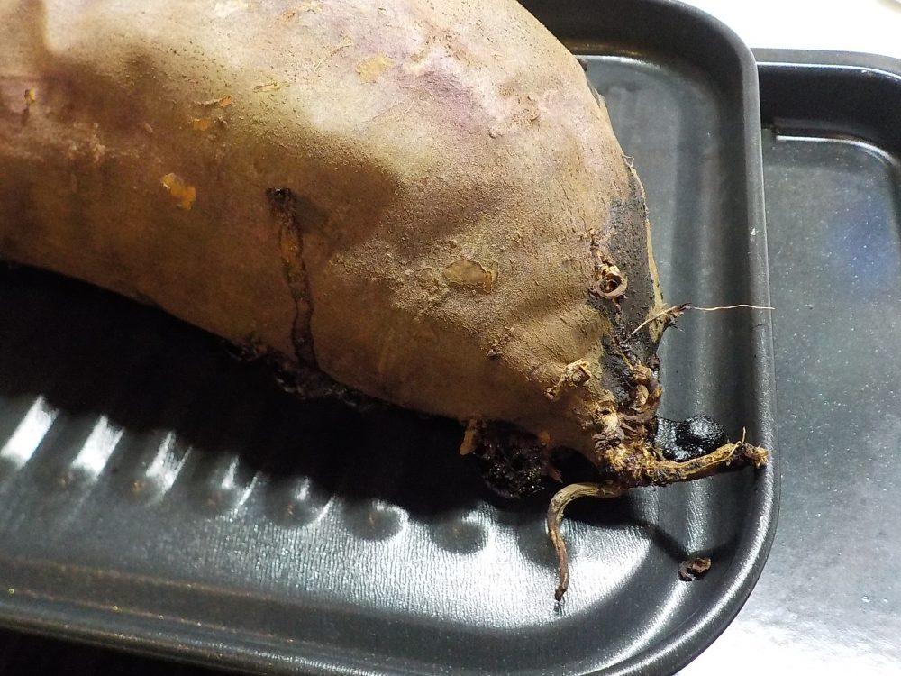 風の谷のナウシカの王蟲に似た焼き芋